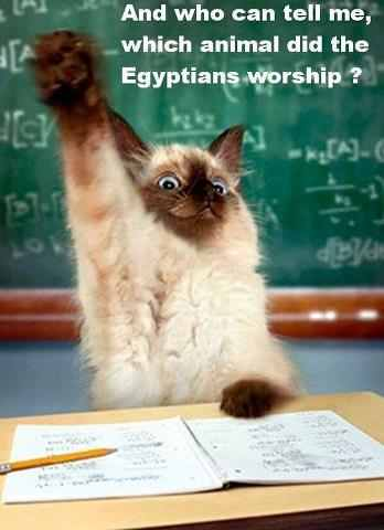 Animal did Egyptians Worship
