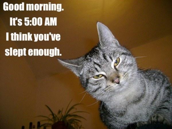 5 AM Cat