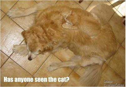 Anyone seen the cat