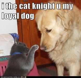 cat-knights-dog_sally