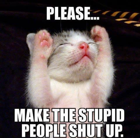 Cat Stupid People