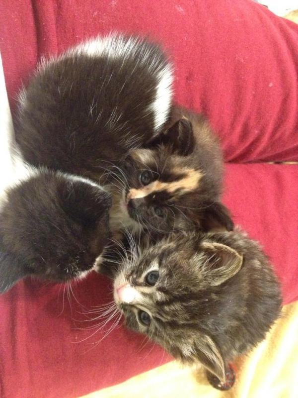 Clump O Kitties