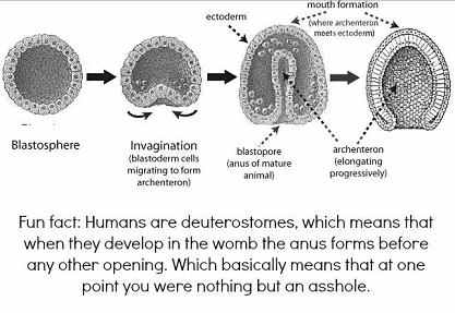 Fun Fact, Anus forms first