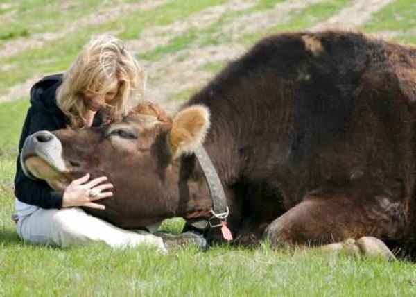How-now-brown-cow