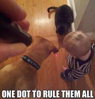 Kid, dogs, cat watching laser dot