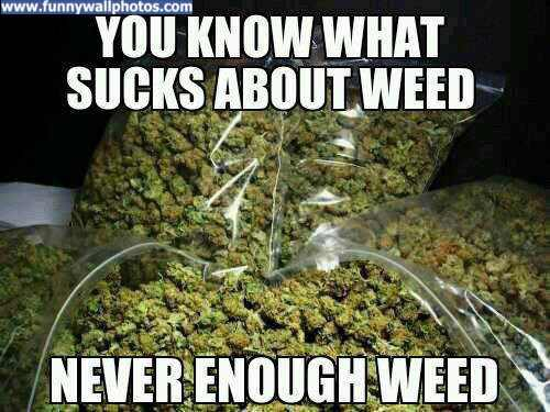 never-enough weed