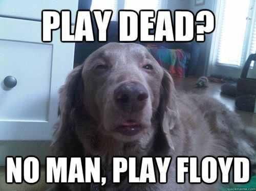 Play dead, No Play Floyd