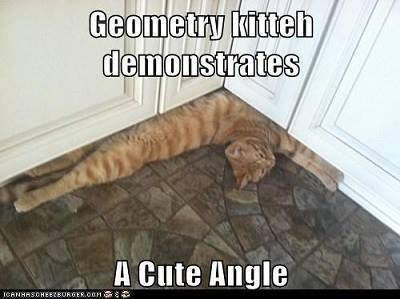 Right Angle Cat