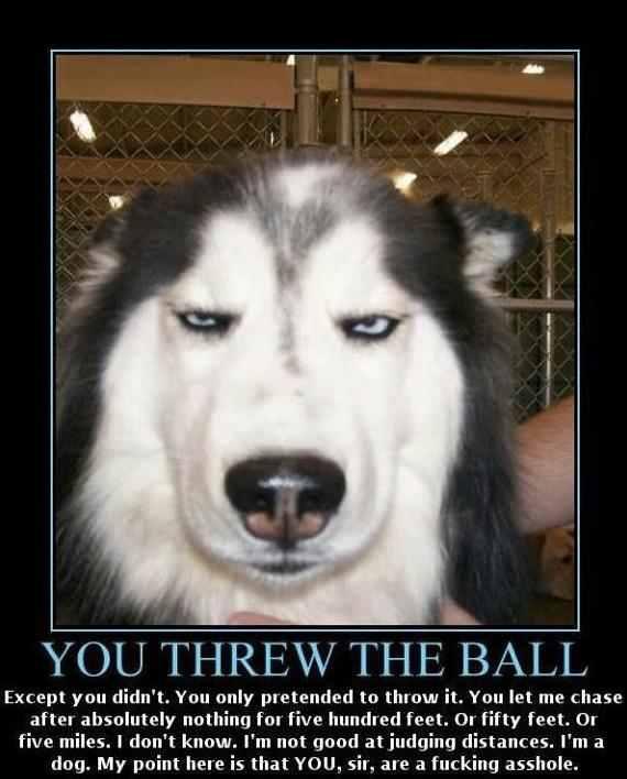 You threw the ball,dog upset
