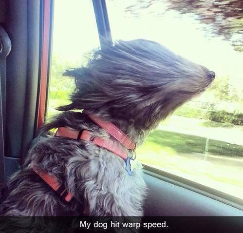Dog at warp speed