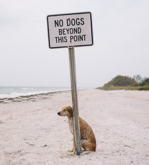 No Dogs past this point