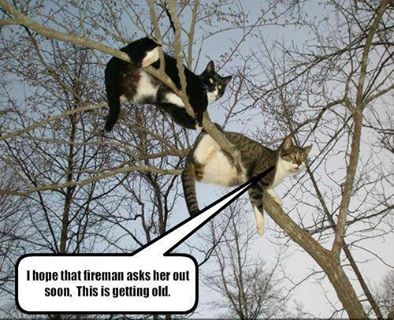 Cats in tree scam