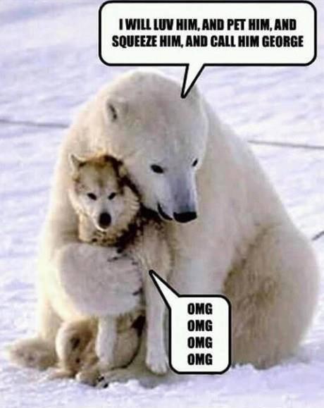 Funny Animals000