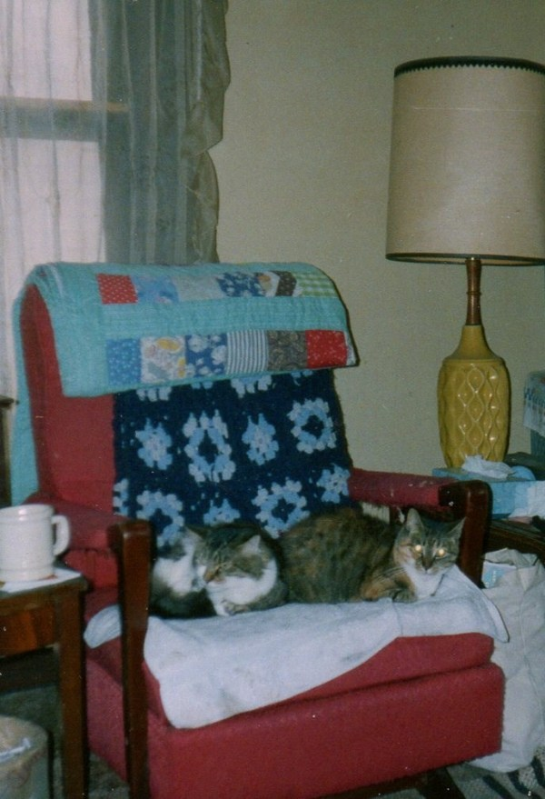43. Zeke and Herbie in chair