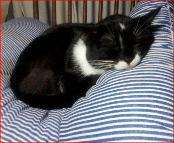 Comfy Sylvester-Jan. 2015