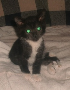 Digger-Glowing Eyes at 4 months