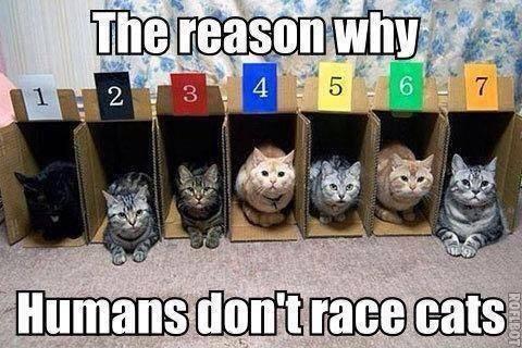 7 cat race