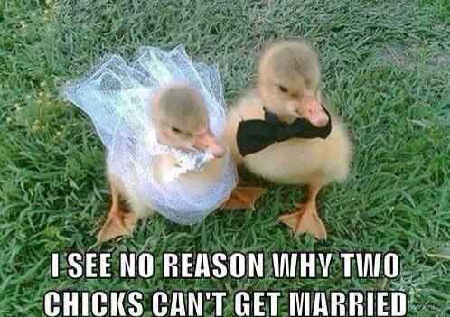 Marrying Chicks