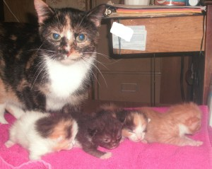 Little Momma with Dot..t, Digger, Xena, Lorenzo(l-r)