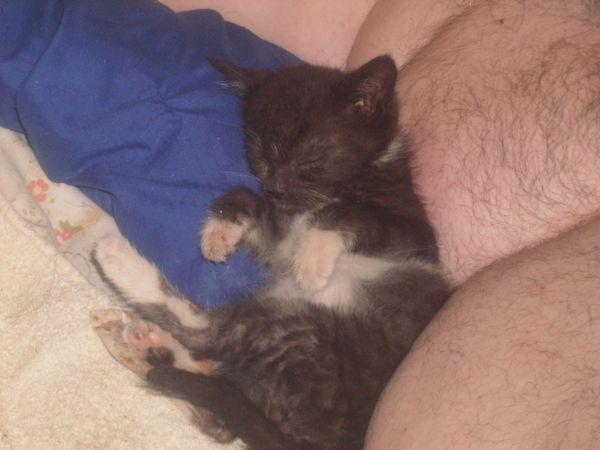 Digger asleep after eating.